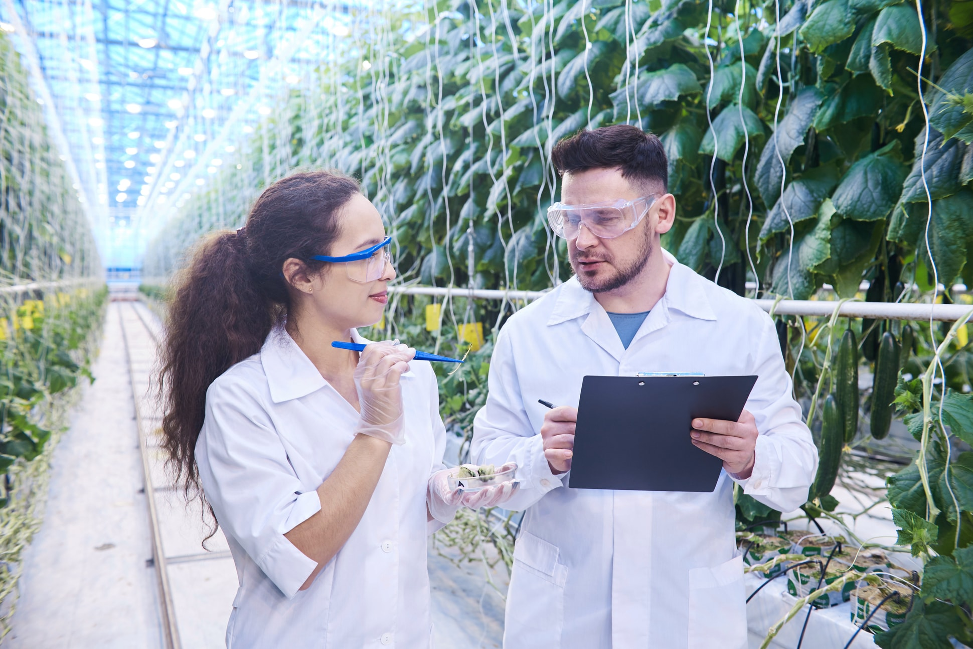 How Agriculture Can Be The Great Industry To Work In?